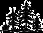 Tree Symbol Jess Soper wedding day information